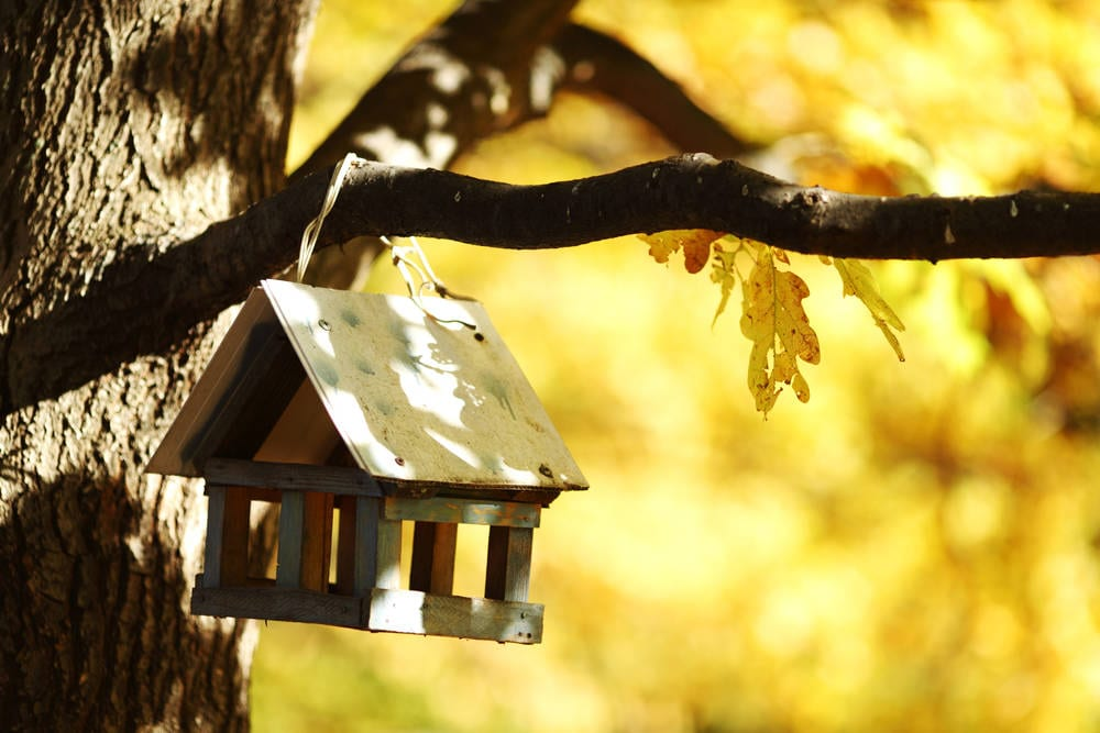 residential-cabin-in-autumn